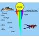 Description d'une maille, nappe et structures et disparition des couleurs dans l eau